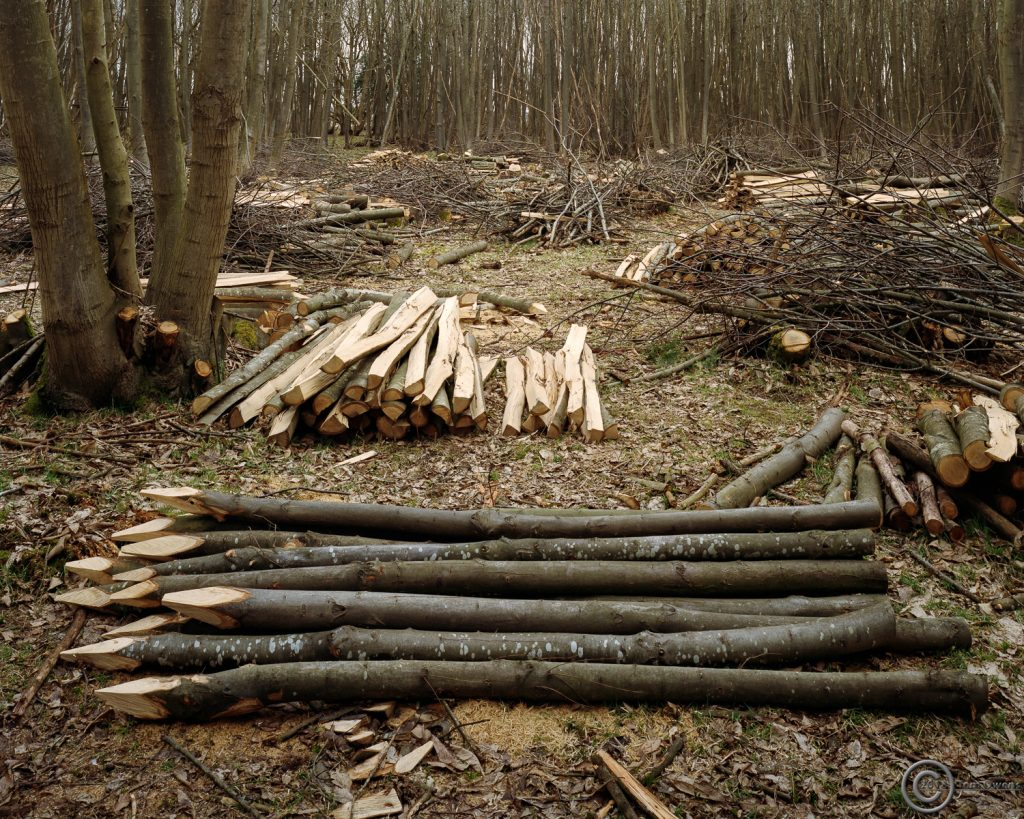 Cut chestnut logs
