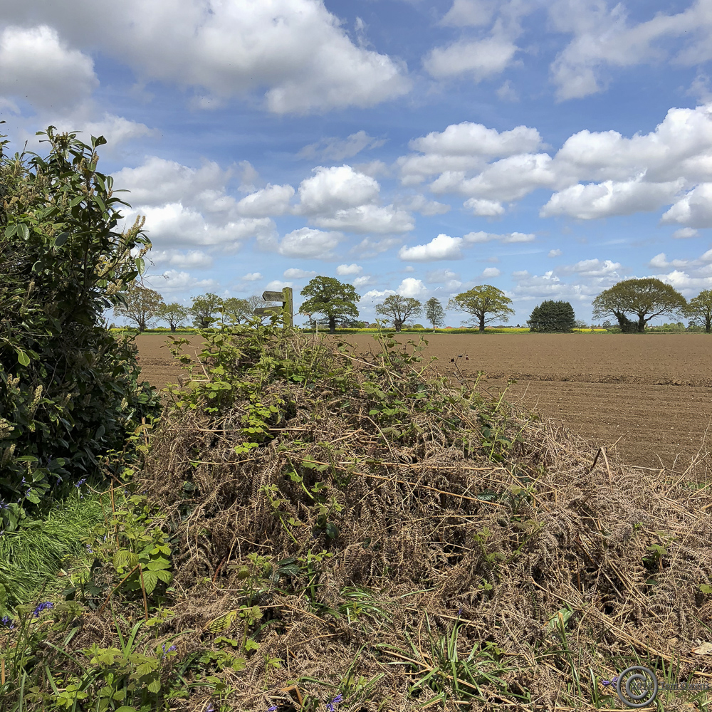 Braken, ploughed field and tree line