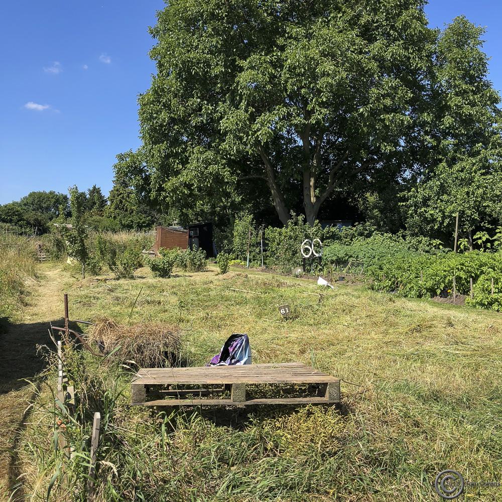Cut vegetation