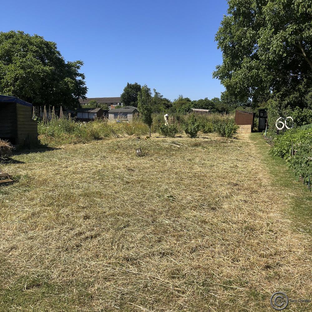 Cut and drying vegetation