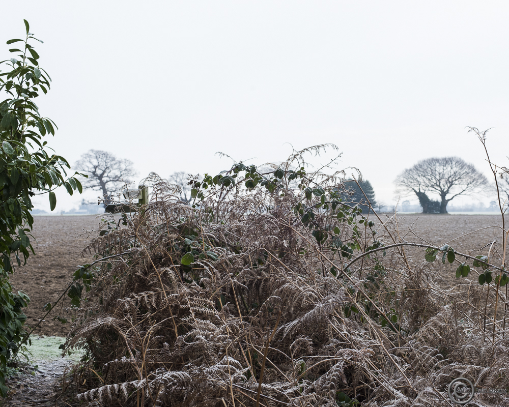 Frosted bracken, signpost and veteran trees